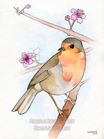 Robin in the cherry blossoms by Hikasawr