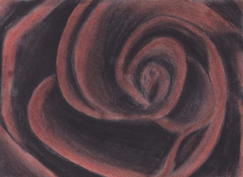 Charcoal Red Rose by Bex013