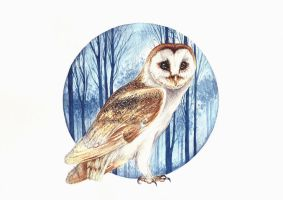 Barn owl, watercolors by red-fox-child
