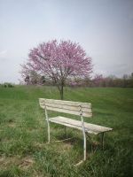 The Lonely Bench VI by viviP