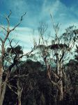 Mt. Lofty by Giggle-Monster