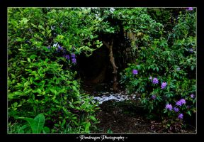 Stanley Park 2 by pendragon93