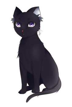 Cat by snowshore