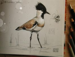 # 67 - River lapwing - by Loisa