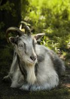 with horns by Anti-Pati-ya