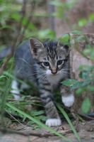 Cat Stock 126 by Malleni-Stock