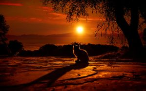Sunset cat by ElenaDudina
