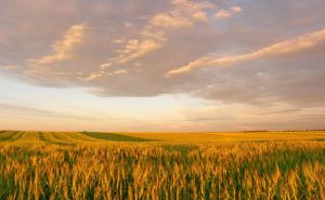 summer panorama 3 by victor23081981