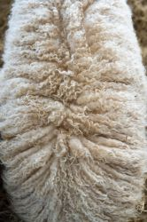 Fur Texture - Cotswold Farm Park by jeffkingston