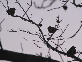 silhouettes of birds by DisneyPrincessNeeNee