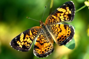 Butterfly no. 6 by Mischi3vo