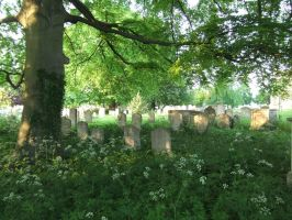 Overgrown Cemetery by fuguestock