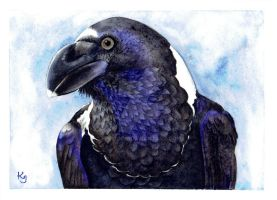 African White-Necked Raven by IvieMoon