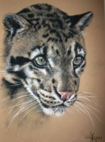 Clouded Leopard by xxx-ellie