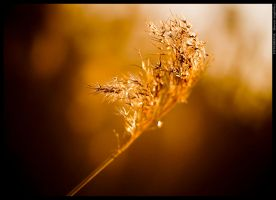 Touch of nature by mjagiellicz
