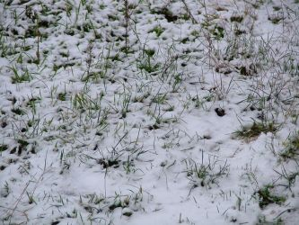 snow on grass by serialkillerstock