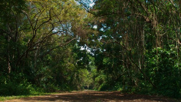 Road at the rainforest by WaSSa