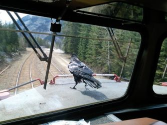 Railfan or Conductor Raven? by MrConductor