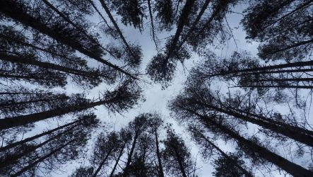 Just a pine forest 3 by maaaks1