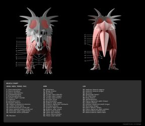 Muscle Diagram 3 by Red-Dilopho
