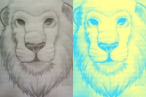 2 Toned Lion by Flash-Gamers