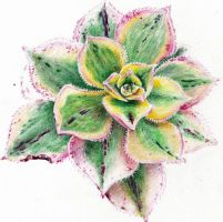 Colorful succulent by KingVahagn
