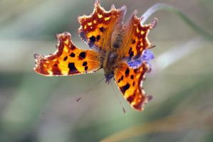 A comma before a fullstop by karliosi