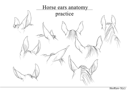Horse Ears |anatomy practice| by HorRaw-X