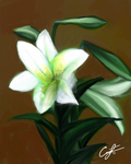 Lilies 1 by Angelix88