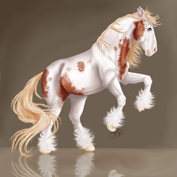 Bay Tovero Draft Horse by or2684
