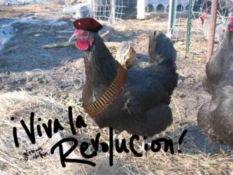GLORIOUS CHIKIN REVOLUTION by sauch