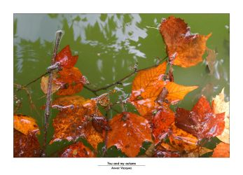 YOU and my autumn by anwar