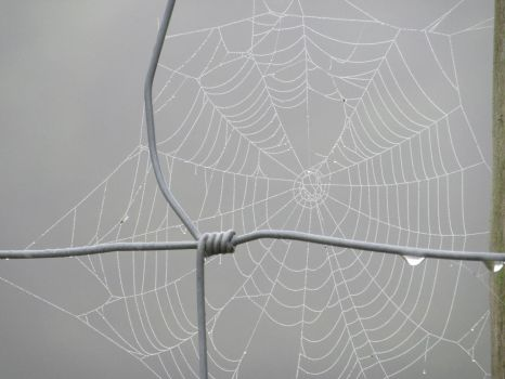Foggy Web by buttercupminiatures