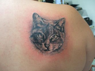 just a cat by tatuato
