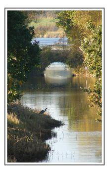 The bridge and the heron by jchanders