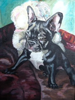 French Bulldog by DaphneBlake