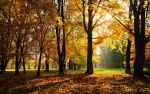 Goodbye Autumn by hquer