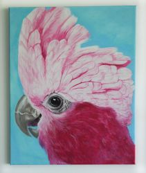 Galah by Shelley-May