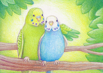 budgies aceo :3 by yeyeyy