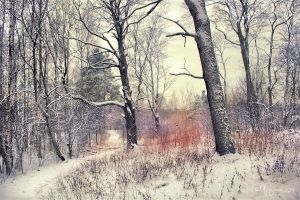 Trees in winter by Pajunen