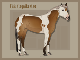 FSS Taquila One by PhantomHorse96