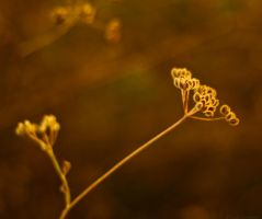 Lovage IV by LuciaConstantin