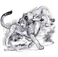 cheetahs by Light-Angel-Vera