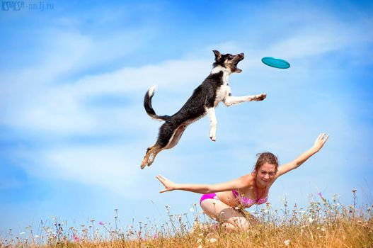 Border collie and frisbee by Ksuksa-Raykova
