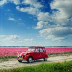 Splash of Spring by Oer-Wout