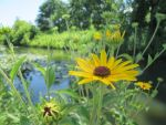 Forest Park Summer 2014 (VOLTA) Nature Conservancy by sun-design09s-trent