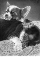 Relaxing puppies by Torsk1