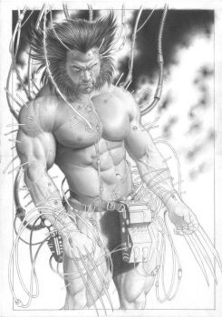 Wip- layout wolverine by petervale