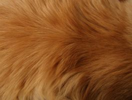 Fur texture II by AnnFrost-stock
