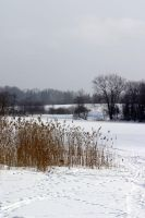 Winter by aare